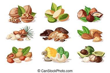 Cartoon Colorful Nuts Set