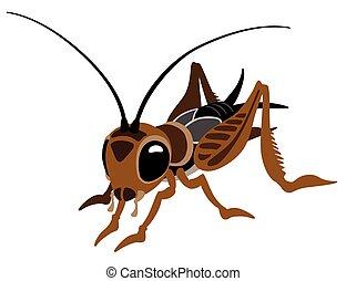 cartoon cricket bug isolated on white
