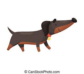 Cartoon dachshund. Vector illustration on a white background.