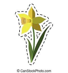 cartoon daffodil flower leaf bloom