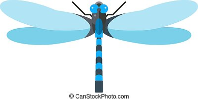 Dragonfly anax imperator male blue emperor with big eyes...