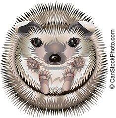 Cartoon funny hedgehog