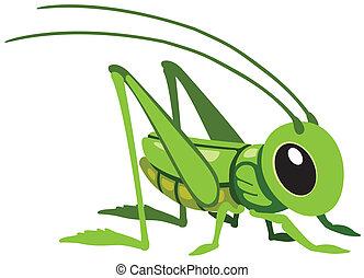 cartoon grasshopper for little kids, image isolated on white