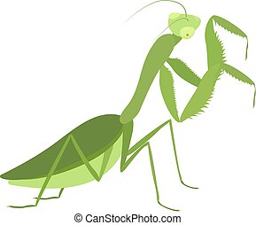 Cartoon insect, green praying mantis isolated on white