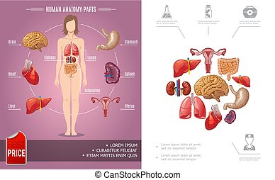 Cartoon Human Anatomy Colorful Concept