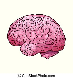 Cartoon illustration of a human brain with highlights and shadows. Side view