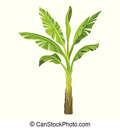 Cartoon illustration of banana palm. Tree with big bright green leaves. Tropical plant. Graphic design element for infographic. Detailed flat vector icon