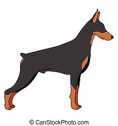 Cartoon illustration of doberman dog isolated on white