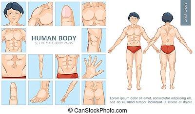 Cartoon Male Body Parts Concept