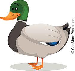 Cartoon Mallard Duck - Illustration of a cartoon mallard ...
