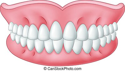 Cartoon model of teeth isolated