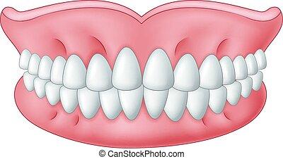 Cartoon model of teeth isolated