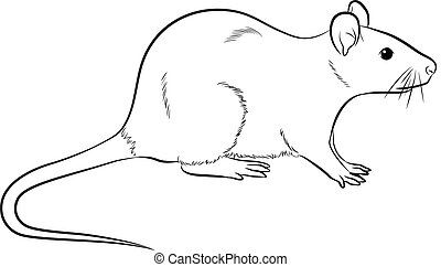 Cartoon Mouse Drawing Vector
