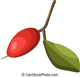 Cartoon of a red miraclefruit with green leaf on a branch vector illustration on white background.