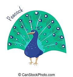 Cartoon peacock isolated on white