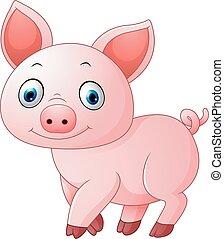 Cartoon pig isolated on white backg