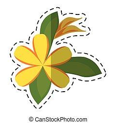 cartoon plumeria flower decoration icon