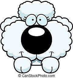 Cartoon Poodle Peeking - A cartoon illustration of a poodle...