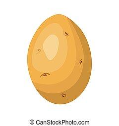potato isolated on white background, vector illustration