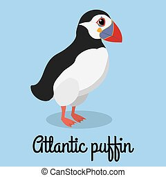 cartoon puffin color illustration. Stock bird vector