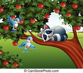Cartoon raccoon sleep on the apple