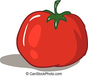 Cartoon red tomato vector illustration on white background