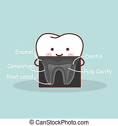 cartoon, tand, hos, x stråle