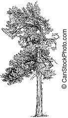Cartoon Vector Drawing of Pine Conifer Tree