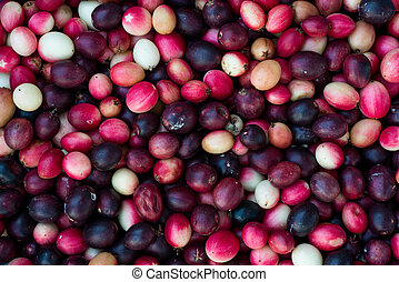 Carunda, Karonda fruite.