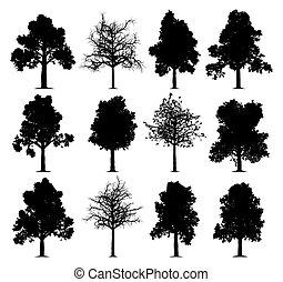 carvalho, árvores