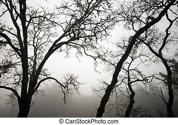 carvalho, árvores, em, preto branco