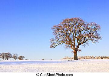carvalho, único, árvore, neve paisagem