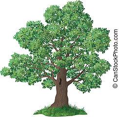 carvalho, capim, árvore, verde