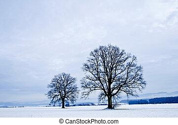 carvalho inverno