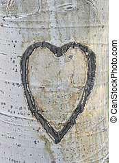 carved aspen heart - empty heart carved into aspen bark on a...