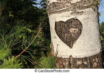 Carved heart in bark of birch tree