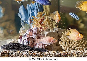 Acquario pesce gatto resti suolo hypostomus for Acquario casa prezzi
