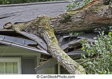 casa albero, quercia, tetto, grande, piccolo, frantuma