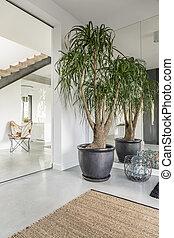 casa, con, rango, piante
