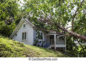 casa, danno, albero, cadere, tempesta, duro, secondo