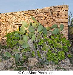 casa, drystone, flores, cacto, amarillo