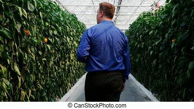 casa, examinar, verde, plantas, hombre, 4k