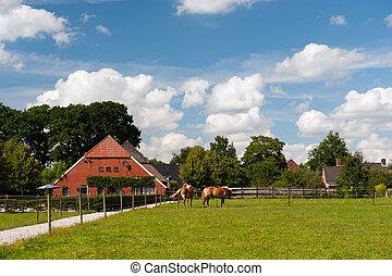 casa fattoria, olandese