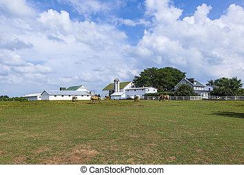 casa fazenda, com, campo, e, silo