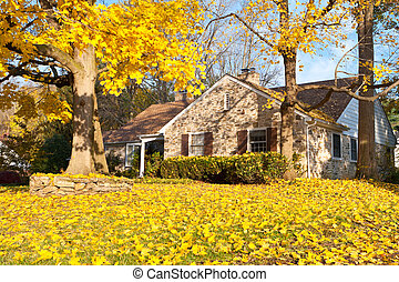casa, filadelfia, amarillo, otoño, otoño sale, árbol