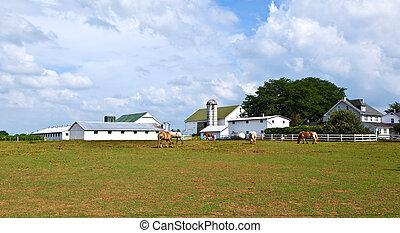 casa granja, silo, campo