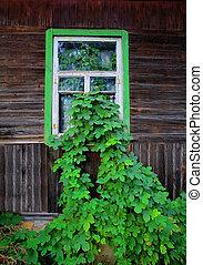 casa, hojas, grew