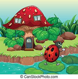casa, insetto, fungo, ballo