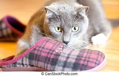 casa, juego, pantuflas, gato