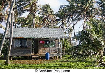 casa, nicaragua, palma, cabaña, árboles